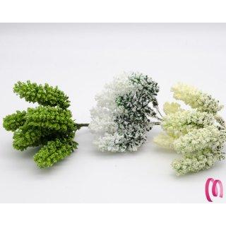 Fiore Pistilli Nebbiolina in confezione da 36 pezzi